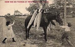 donkey(0.0), art(1.0), mule(1.0), pack animal(1.0), horse(1.0), history(1.0),