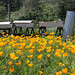 Bee Hives and Poppies