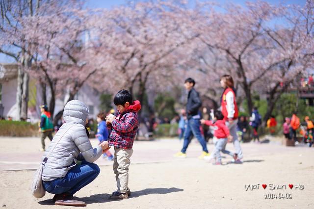 Sakura Playground