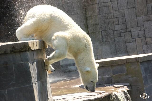 Besuch Zoo Rostock 07.05.201642