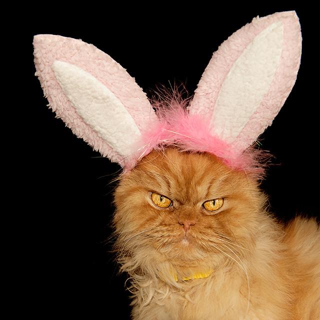 Garfi-Bunny Cat