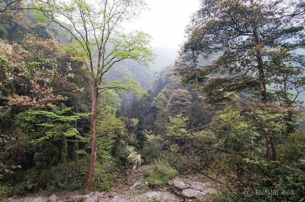 Hiking in Green Emei Shan