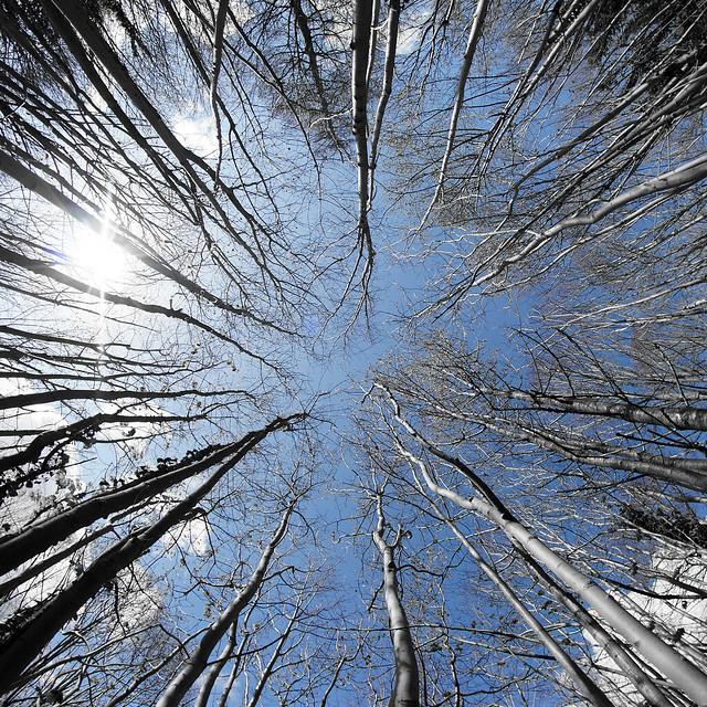 Trees, Wandlebury