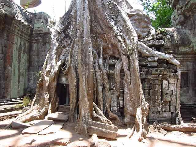 Tree Roots and Ruins