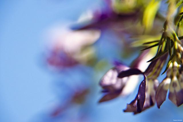 Sky bokehed flower