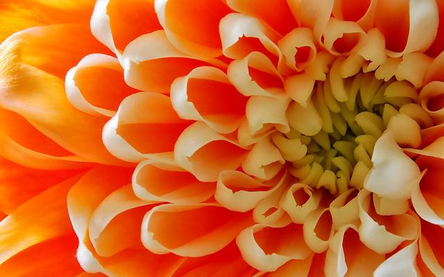 essays symbolism chrysanthemums Free chrysanthemums symbolism papers, essays, and research papers.