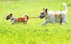 blind-dog_2214592k