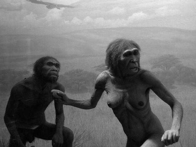 1.5 million years ago: Homo ergaster couple defending carrion