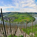 Riesling vinyards at heart of the winding Moselle River
