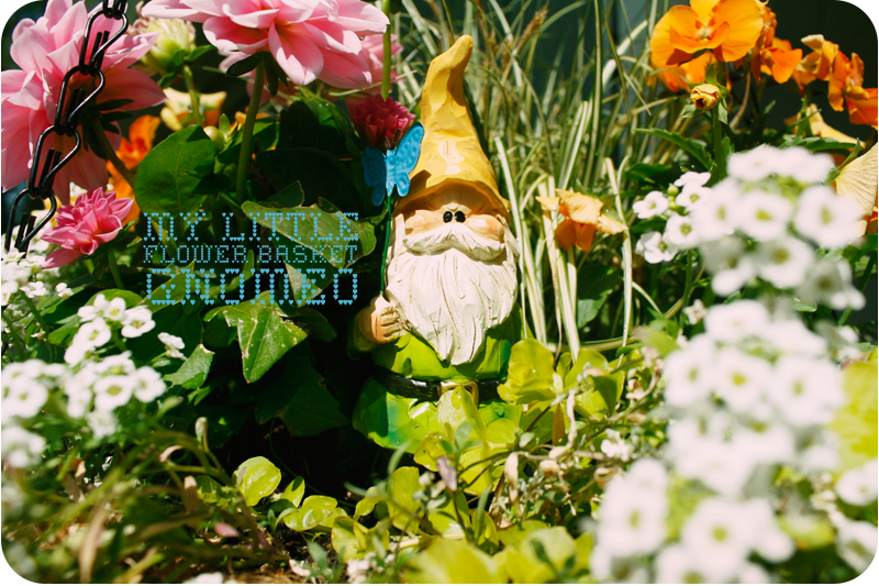 {gnomeo} in my flower basket
