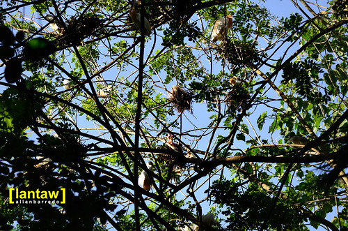Nest-laden branches