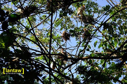 Nest-laden branches