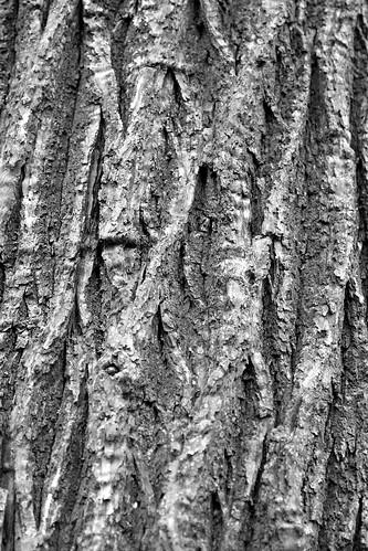 texture (close up)