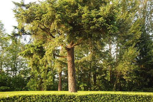 Tree on the Nike campus, Beaverton, Oregon, USA by Wonderlane
