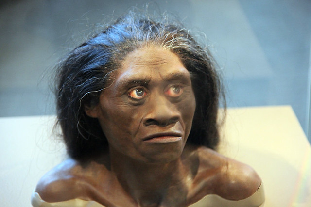 Homo floresiensis adult female - model of head - Smithsonian Museum of Natural History - 2012-05-17