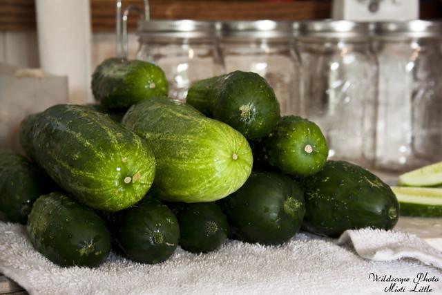 cucumber5