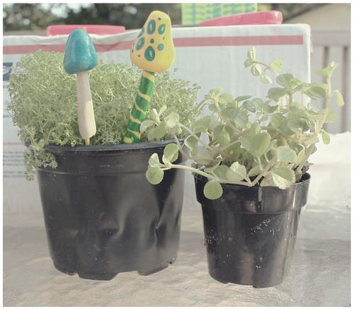 terrariumplants