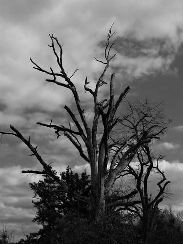 blackandwhite tree nature arkansas baretree blackandwhitephotography michelehenry fountainhill ashleycounty fountainhillarkansas micheleburnsidehenry michelehenryphotography ashelycountyarkansas