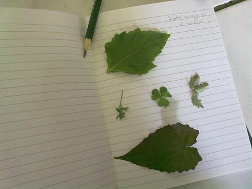 Estudio de plantas hoy
