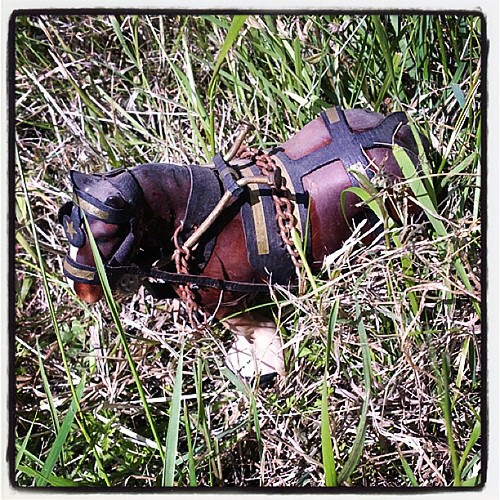 Random Horse in the Grass