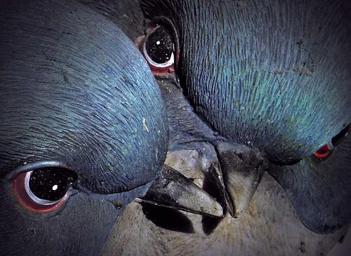Night Birds Indigo... by Sea Moon