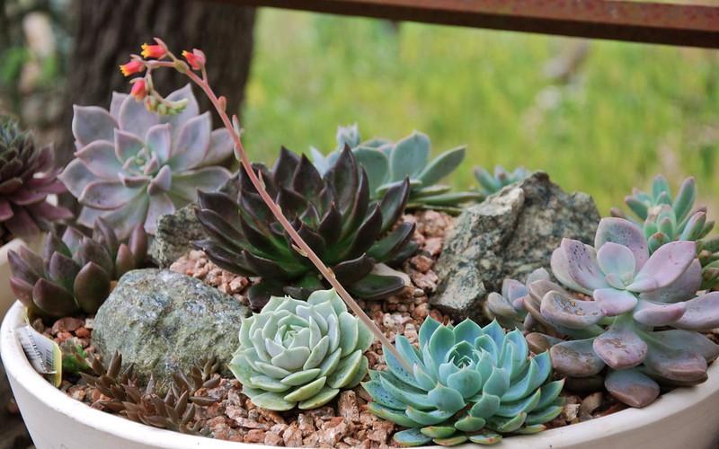New troth garden