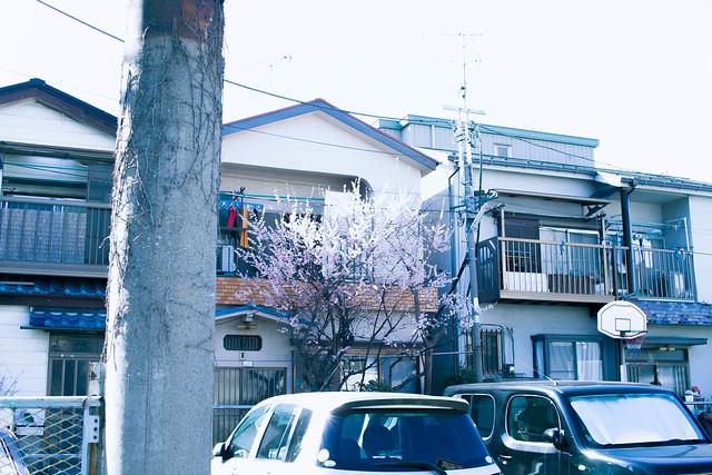 京成立石歩き-33