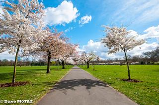 Spring in Battersea Park