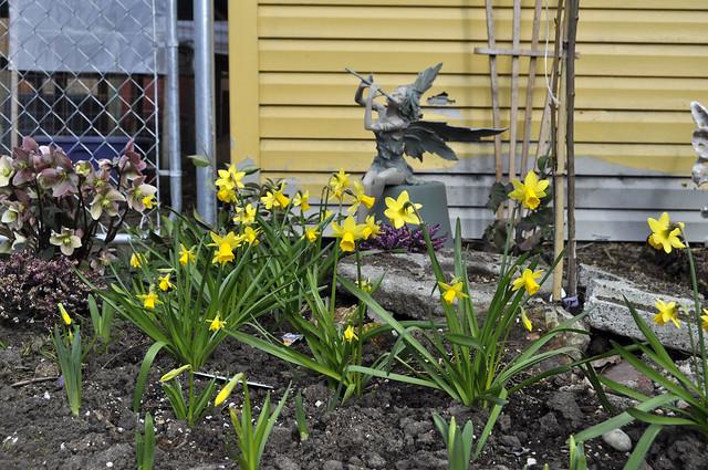 spring in the garden 019