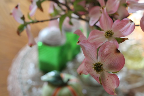 Dogwood blossoms by DiPics