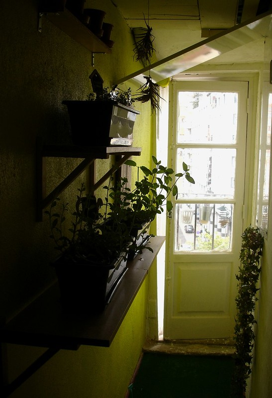 The Atelier Today: Our Green Passageway