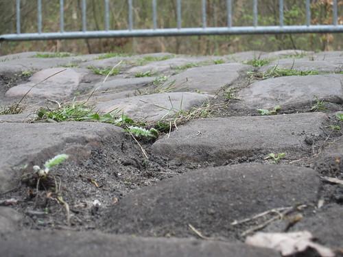 Paris-Roubaix Arenberg sector