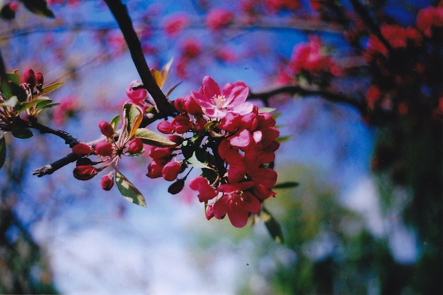 spring21