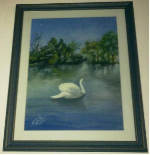 cisne azul