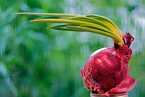Onion Fleeing