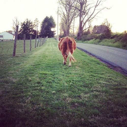 Walking her home. (again).