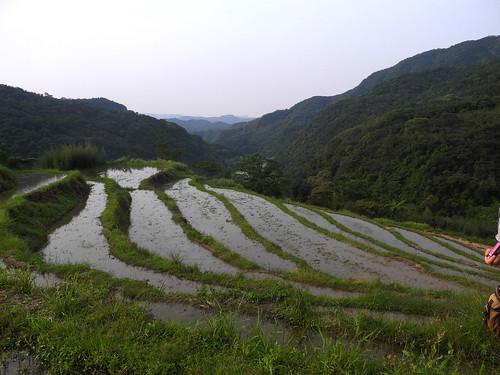 貢寮山區的水梯田。