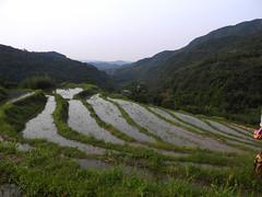 水梯田蘊含豐富的治水洪防、生物多樣性等多功能價值,常常被忽略。