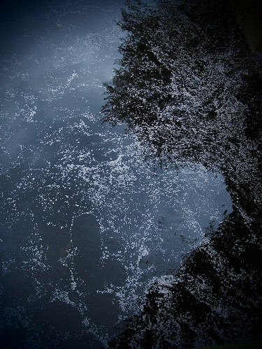 桜 2012 神田川 (江戸川橋)