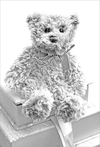 High key teddy by Helen in Wales