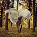Fragile Wings by Kyle.Thompson
