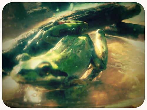 Frog In A Jar