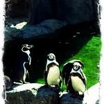 20120513 calgary zoo - 3