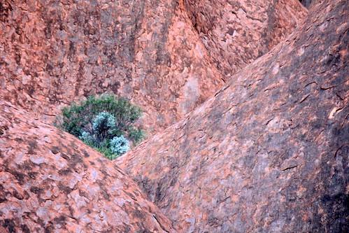 IMG 9967 Uluru Dreaming 2012