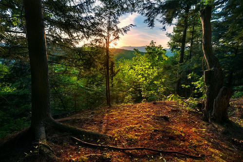 wood trees sunset test usa sun mountain 3 detail tree nature set forest canon landscape eos woods vermont quiet peace view angle mark iii wide peaceful 5d stowe setting hdr mk mk3