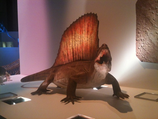 dimetrodon replica