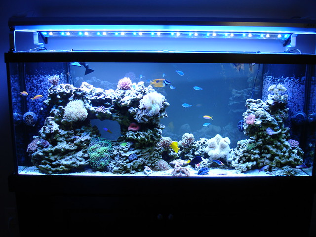 complete 120g reef tank setup reef central online community