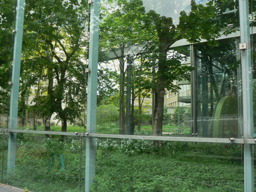 fondation Cartier.jpg