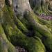 Wepham Trunks. by John Dominick