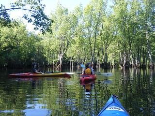 Sparkleberry Swamp Jun 2, 2012 10-08 AM